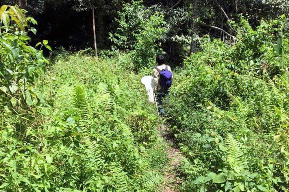 西マレーシアで虫取りをする牧田習